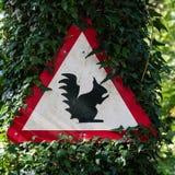 σκίουροι Στοκ εικόνες με δικαίωμα ελεύθερης χρήσης