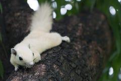 σκίουροι Στοκ φωτογραφία με δικαίωμα ελεύθερης χρήσης