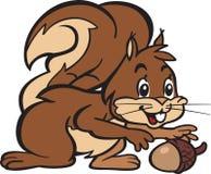 Σκίουρος και δρύινο καρύδι Στοκ Φωτογραφίες