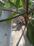 Σκίουρος και φύση στοκ εικόνα