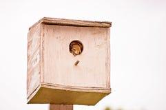 Σκίουρος μωρών Στοκ Φωτογραφίες