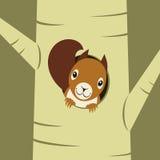 Σκίουρος που κοιτάζει από την τρύπα φωλιών Στοκ φωτογραφίες με δικαίωμα ελεύθερης χρήσης