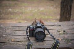 Σκίουρος που παίρνει τις εικόνες στοκ φωτογραφίες με δικαίωμα ελεύθερης χρήσης
