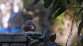 Σκίουρος που σέρνεται σε έναν φράκτη φιλμ μικρού μήκους