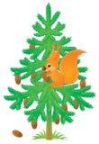 Σκίουρος σε ένα έλατο ελεύθερη απεικόνιση δικαιώματος
