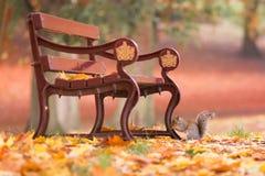 Σκίουρος σε ένα πάρκο φθινοπώρου κάτω από έναν πάγκο μεταξύ των φύλλων στοκ φωτογραφία με δικαίωμα ελεύθερης χρήσης