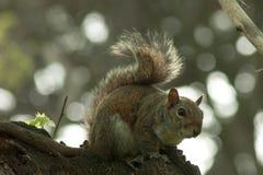 Σκίουρος στο πάρκο με το δέντρο στοκ φωτογραφία