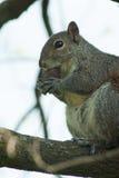 Σκίουρος στο πάρκο με το δέντρο στοκ εικόνες
