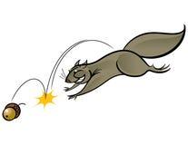 σκίουρος απεικόνιση αποθεμάτων