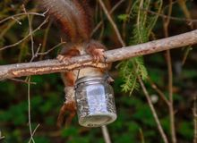Σκίουρος Στοκ φωτογραφία με δικαίωμα ελεύθερης χρήσης