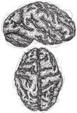 Σκίτσα εγκεφάλου Στοκ φωτογραφία με δικαίωμα ελεύθερης χρήσης