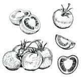 Σκίτσα ντοματών μελανιού καθορισμένα Απεικόνιση αποθεμάτων