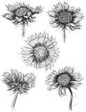 Σκίτσα Wildflower Στοκ Φωτογραφία