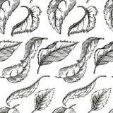 Σκίτσο δέντρων της Apple για το σχέδιο Στοκ Φωτογραφίες