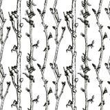 Σκίτσο δέντρων της Apple Στοκ φωτογραφίες με δικαίωμα ελεύθερης χρήσης