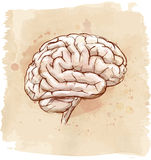Σκίτσο εγκεφάλου Στοκ Φωτογραφίες