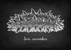 Σκίτσο κιμωλίας του αγγουριού θάλασσας Στοκ φωτογραφία με δικαίωμα ελεύθερης χρήσης