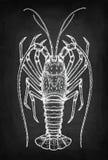 Σκίτσο κιμωλίας του ακανθωτού αστακού Στοκ Φωτογραφία