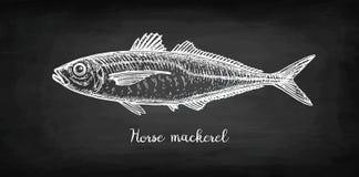 Σκίτσο κιμωλίας του αλόγου - σκουμπρί Στοκ Φωτογραφίες