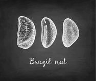 Σκίτσο κιμωλίας του καρυδιού της Βραζιλίας Στοκ Εικόνα