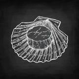 Σκίτσο κιμωλίας του οστράκου Στοκ εικόνα με δικαίωμα ελεύθερης χρήσης
