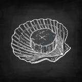 Σκίτσο κιμωλίας του οστράκου Στοκ φωτογραφίες με δικαίωμα ελεύθερης χρήσης