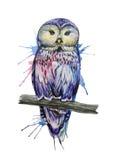 Σκίτσο κουκουβαγιών Watercolor Διανυσματική απεικόνιση