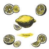 Σκίτσο λεμονιών Εκλεκτής ποιότητας συρμένο χέρι λεμόνι μελανιού, που απομονώνεται στο άσπρο υπόβαθρο Στοκ Φωτογραφίες