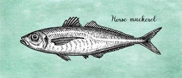 Σκίτσο μελανιού του αλόγου - σκουμπρί διανυσματική απεικόνιση