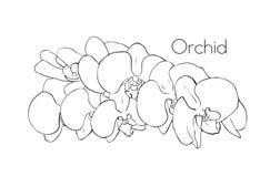 Σκίτσο ορχιδεών ενός λουλουδιού ορχιδεών στοιχείο σχεδίου floral Στοκ Εικόνες