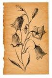 Σκίτσο λουλουδιών σε παλαιό χαρτί Στοκ φωτογραφίες με δικαίωμα ελεύθερης χρήσης