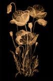 Σκίτσο λουλουδιών στο Μαύρο Στοκ φωτογραφία με δικαίωμα ελεύθερης χρήσης