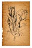 Σκίτσο λουλουδιών στο παλαιό υπόβαθρο εγγράφου Στοκ φωτογραφίες με δικαίωμα ελεύθερης χρήσης