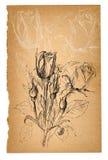 Σκίτσο λουλουδιών στο παλαιό φύλλο εγγράφου Στοκ Εικόνες
