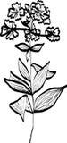 Σκίτσο λουλουδιών Στοκ εικόνες με δικαίωμα ελεύθερης χρήσης