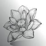 Σκίτσο λουλουδιών Lotus Στοκ Φωτογραφίες