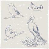 Σκίτσο πουλιών Στοκ Εικόνες