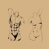 Σκίτσο σώματος Απεικόνιση αποθεμάτων