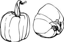 Σκίτσο της ώριμης κολοκύθας στο άσπρο υπόβαθρο Στοκ Φωτογραφίες