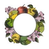 Σκίτσο της Apple Εκλεκτής ποιότητας συρμένο χέρι διάνυσμα μελανιού των διαφορετικών μήλων, που απομονώνεται στο άσπρο υπόβαθρο Στοκ φωτογραφία με δικαίωμα ελεύθερης χρήσης