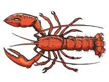 Σκίτσο του αστακού Στοκ φωτογραφίες με δικαίωμα ελεύθερης χρήσης