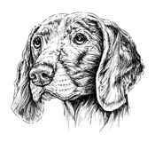 Σκίτσο του δείκτη Weimar σκυλιών επίσης corel σύρετε το διάνυσμα απεικόνισης Στοκ Φωτογραφία