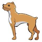 Σκίτσο του σκυλιού μπόξερ Στοκ Εικόνες