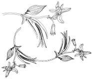 Σκίτσο χεριών λουλουδιών, φύλλων και λοβών βανίλιας Στοκ Φωτογραφίες