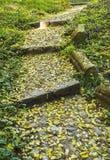 Σκαλοπάτια επάνω στην αλέα το φθινόπωρο Στοκ Φωτογραφία