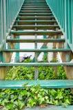 σκαλοπάτια κισσών Στοκ εικόνες με δικαίωμα ελεύθερης χρήσης