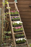 σκαλοπάτια λουλουδιώ&n Στοκ φωτογραφία με δικαίωμα ελεύθερης χρήσης