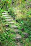 Σκαλοπάτια που εισβάλλονται ξύλινα με τα φυτά Στοκ εικόνα με δικαίωμα ελεύθερης χρήσης