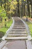 Σκαλοπάτια που καλύπτονται με τα ζωηρόχρωμα φύλλα πτώσης Στοκ Εικόνες