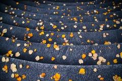 Σκαλοπάτια που καλύπτονται με τα κίτρινα/πορτοκαλιά φύλλα το φθινόπωρο Στοκ Εικόνες